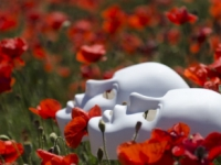images/esemenyek/thumbnails/mask_poppies_field_red.jpg